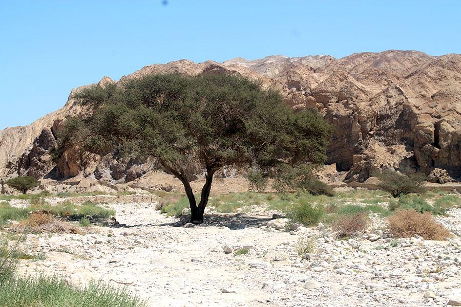 Israel, Dode Zee, Massada, Negev woestijn