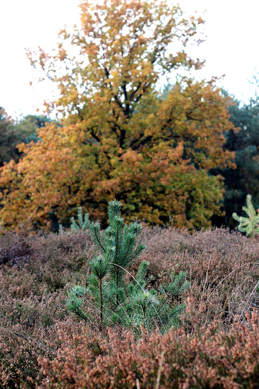 Een dag in het bos, boswandeling, herfst.