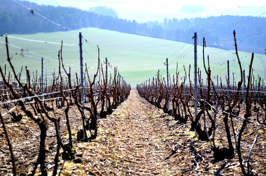 wijngaarden, Bezoek aan de Champagnestreek in Frankrijk