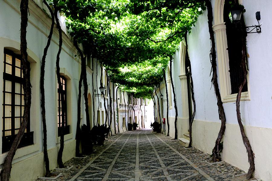 Een bezoek aan de Sherry Bodega, gonzalez byass, sherry wijnen, sherry, sherrywijn