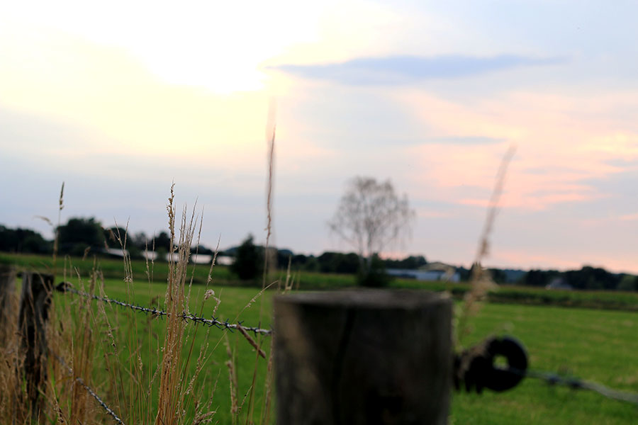 Op vakantie in eigen land: Wandelen door de weilanden van Groesbeek