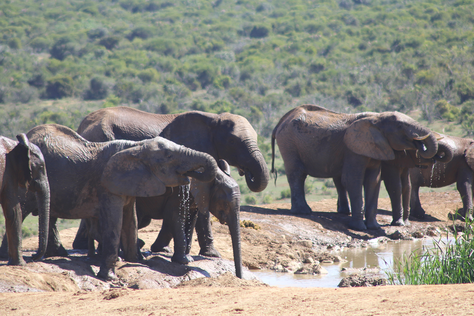 Reizen op de wishlist - Zuid-AFrika