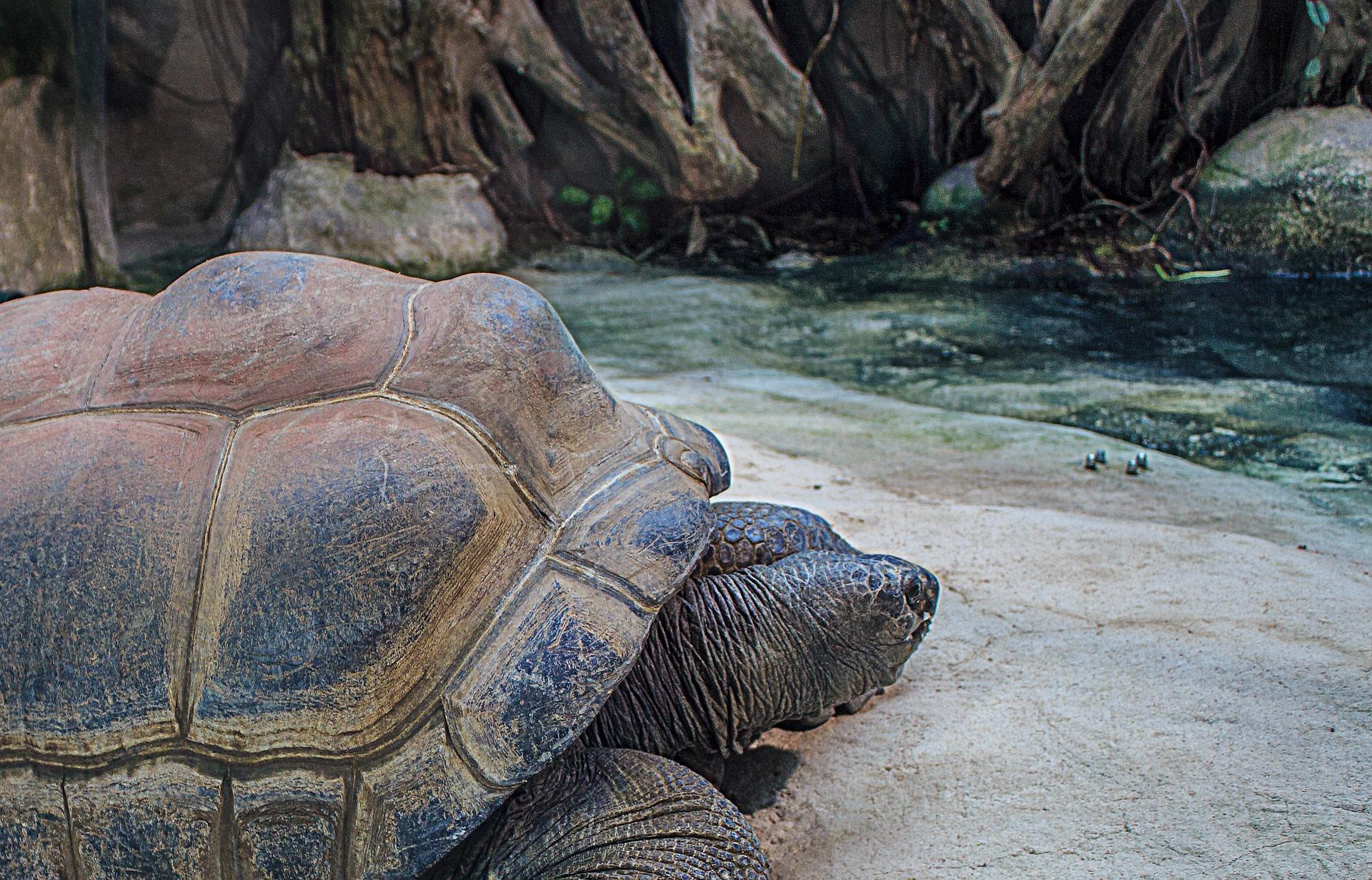 reizen naar de Seychellen