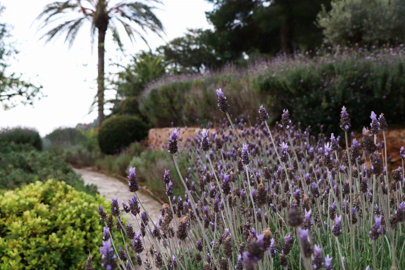 Lavendel-Yoga-Ibiza