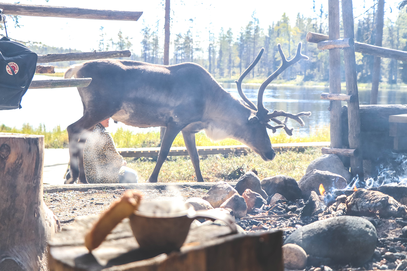 Rendieren spotten in Fins Lapland