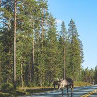 Roadtrip - rendieren spotten
