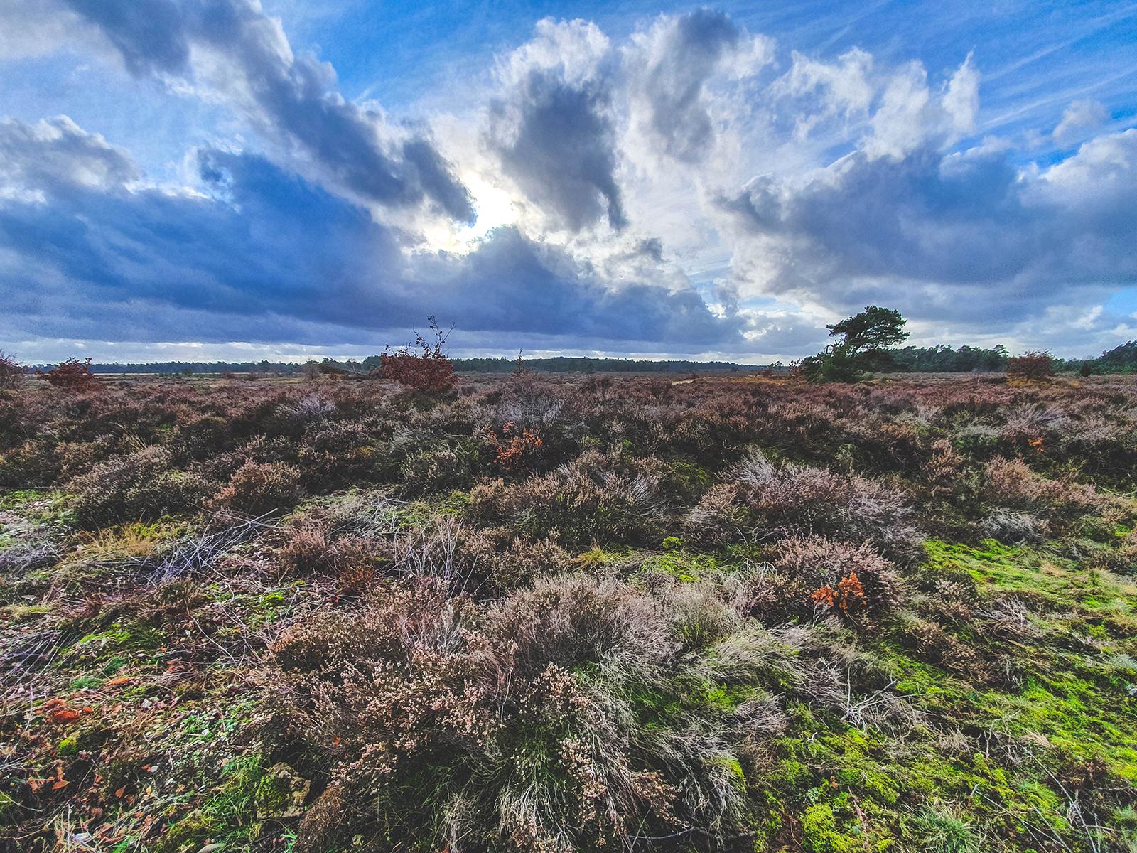 De mooiste Gelderse natuurgebieden -  Veluwe