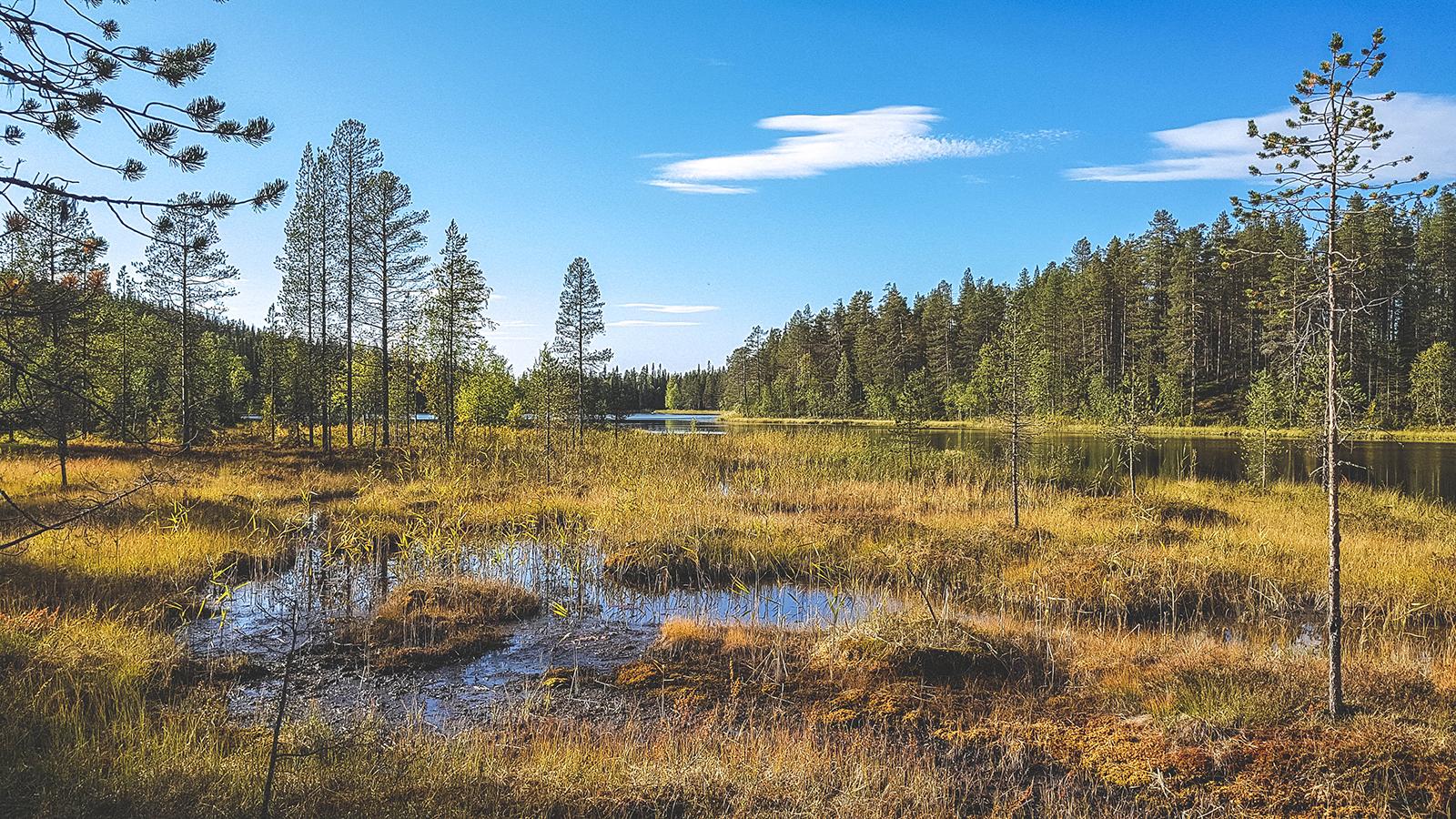 Natuur in Fins Lapland