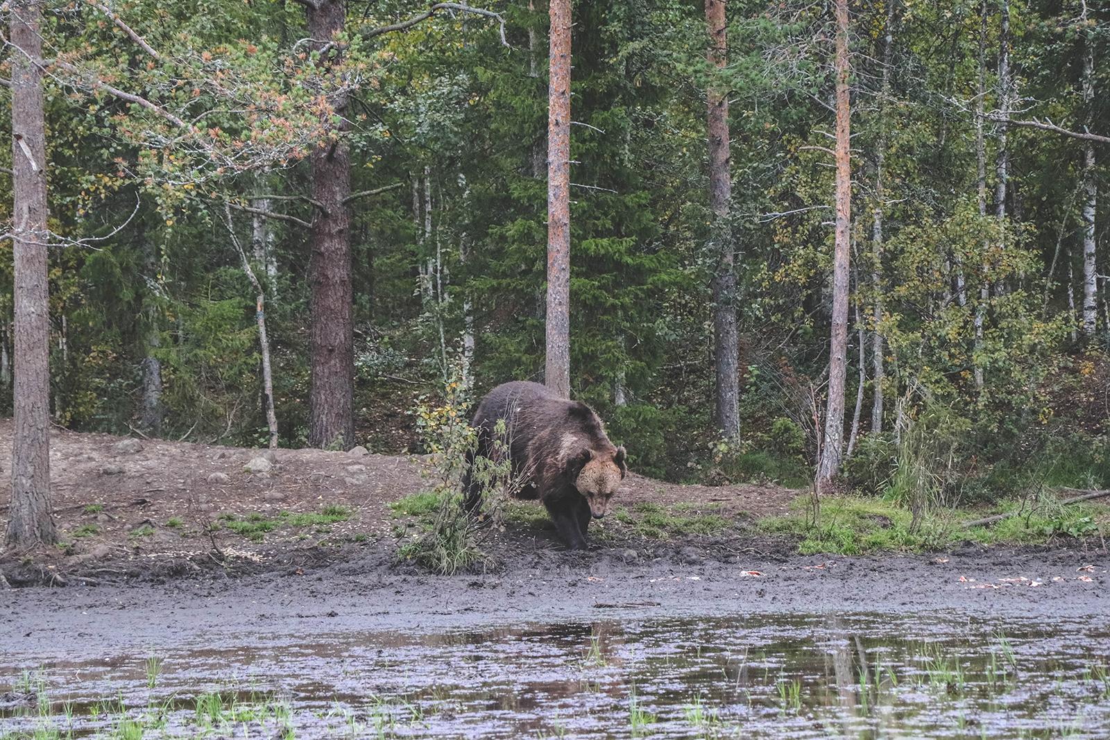 Beren in Finland
