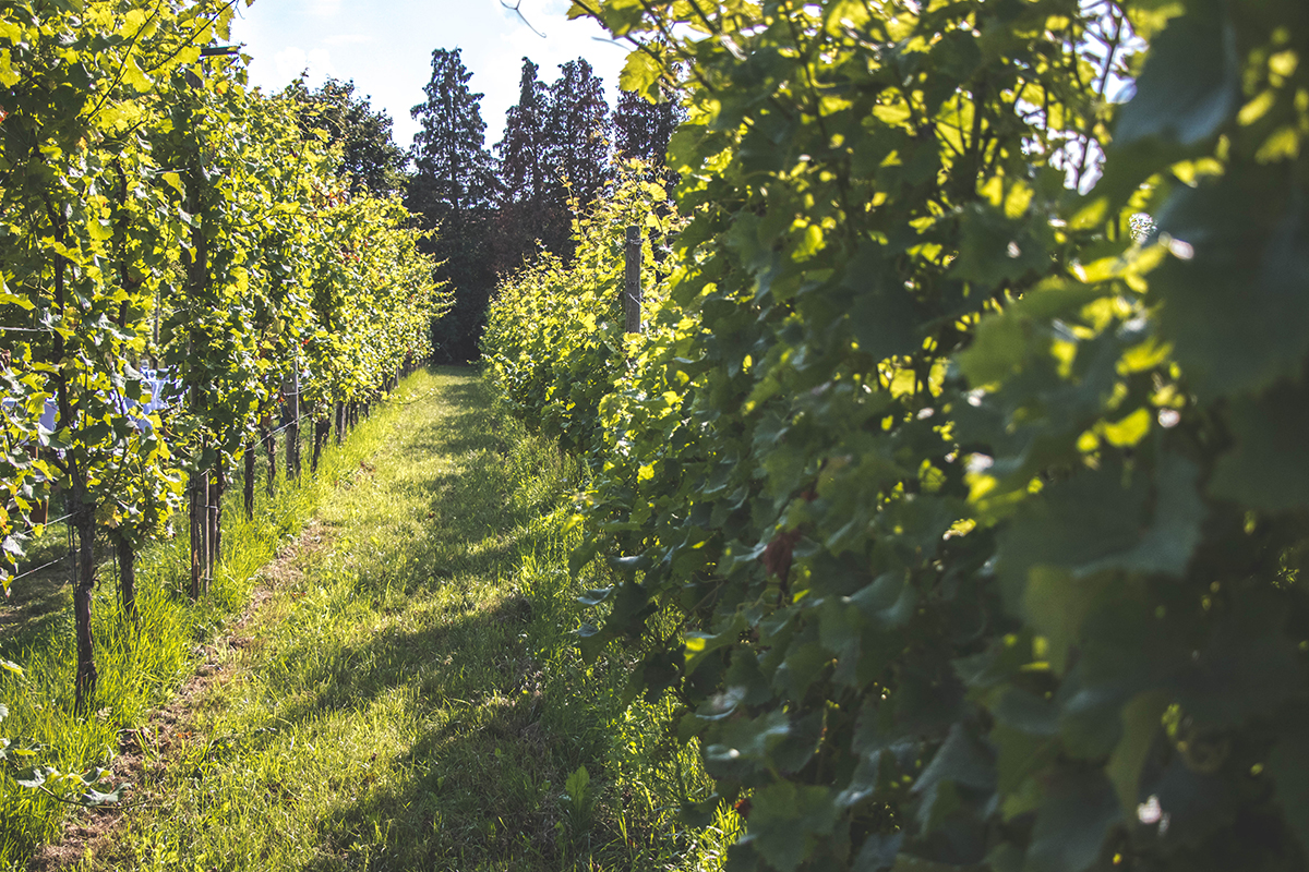 Colonjes Nederlands wijngaarddiner