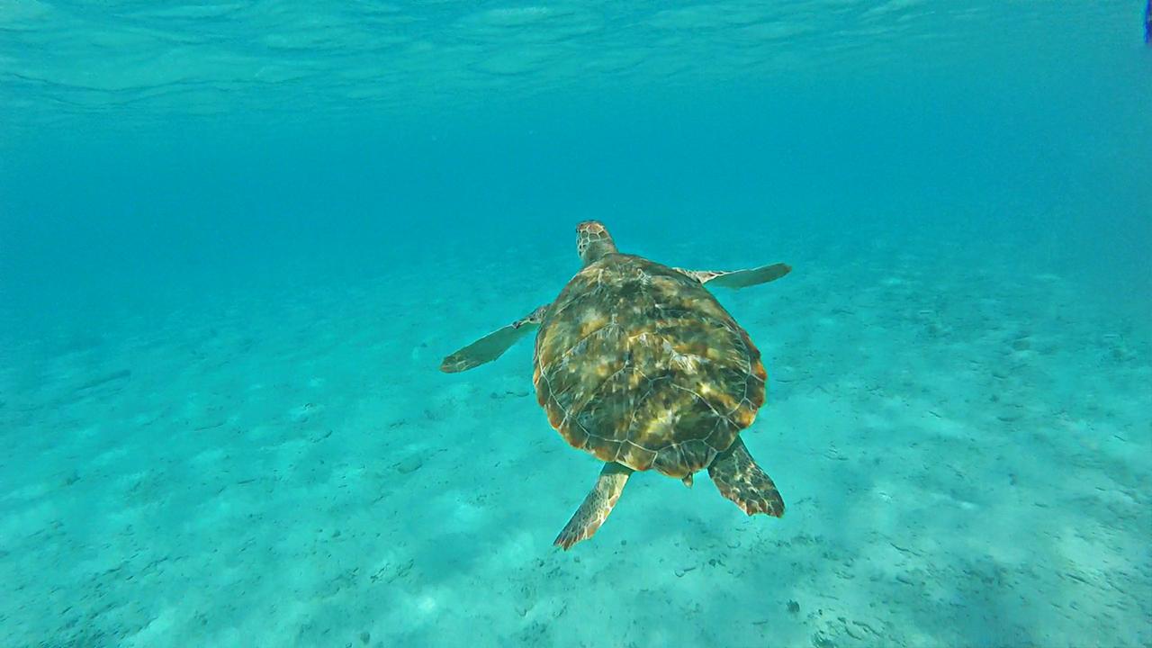Curacao-snorkelen-met-schildpadden