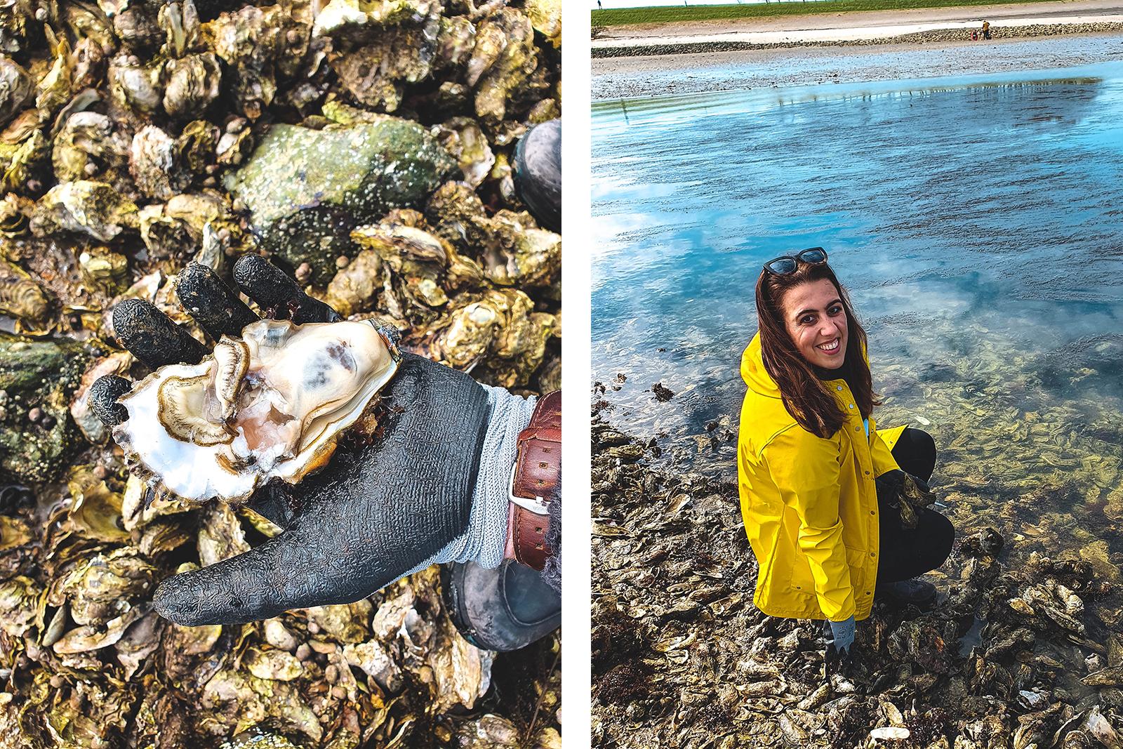 Zeeland oesters rapen